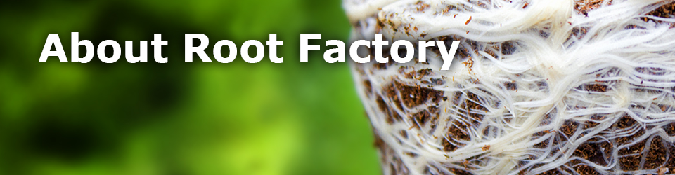 About Root Factory